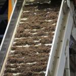 linie procesare tutun (11)